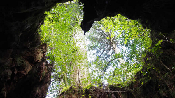 古宇利岛的心形石 由冲绳本岛可驱车前往的古宇利岛,是座环岛一周