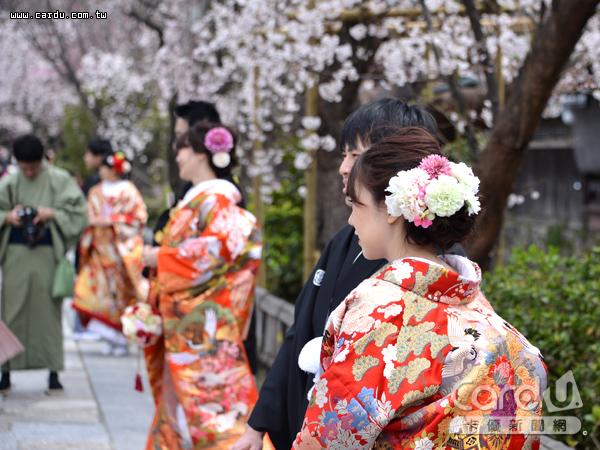 日本櫻花季由南向北蔓延,清明假期帶動旅遊熱潮,攜帶高回饋「旅日神卡」是必備項目(圖/卡優新聞網)